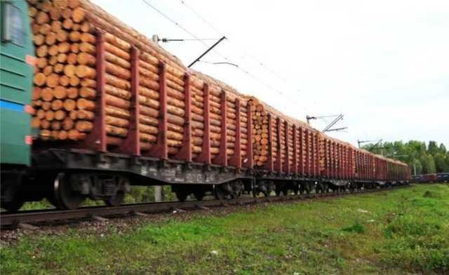В Приморье выявили контрабанду в Китай ценного леса на 40 млн рублей